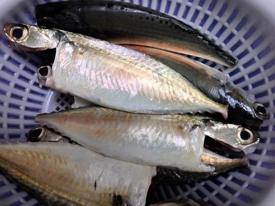 Cá bạc má làm sạch