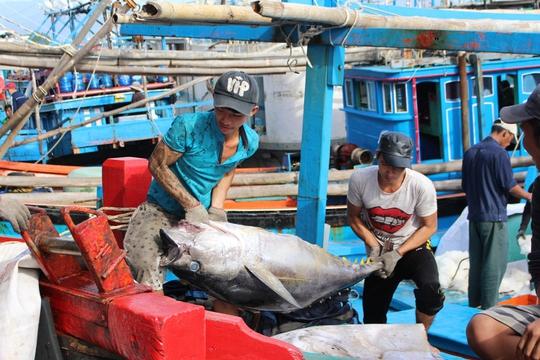 Ngư dân đem cá lên bờ để bán