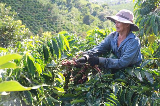 1kg cà phê Việt Nam bán thô chỉ có giá 2 USD, nhưng nước ngoài mua về chế biến, đóng gói, in nhãn mác bán được tới 200 USD.
