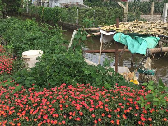 Ngỡ ngàng những con đường hoa rực rỡ làng quê miền Bắc - Ảnh 29.