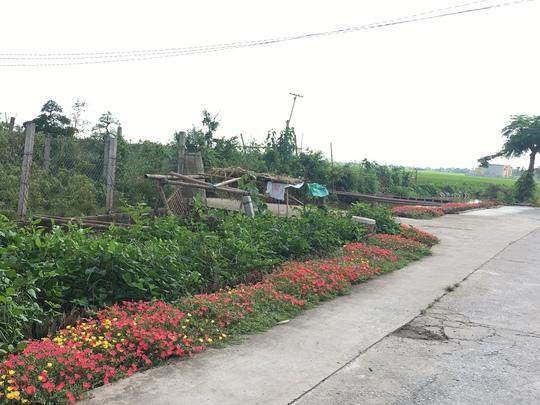 Ngỡ ngàng những con đường hoa rực rỡ làng quê miền Bắc - Ảnh 22.