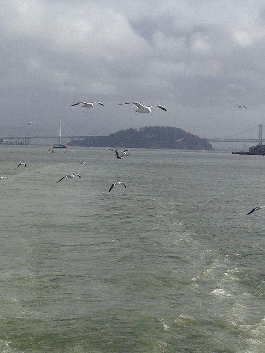 Đàn chim biển tung cánh bám theo con tàu