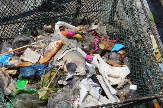 Lãnh đạo Đội Vớt rác trên kênh Công ty Môi trường đô thị TP cho biết xác cá chết đợt này xen lẫn với rác