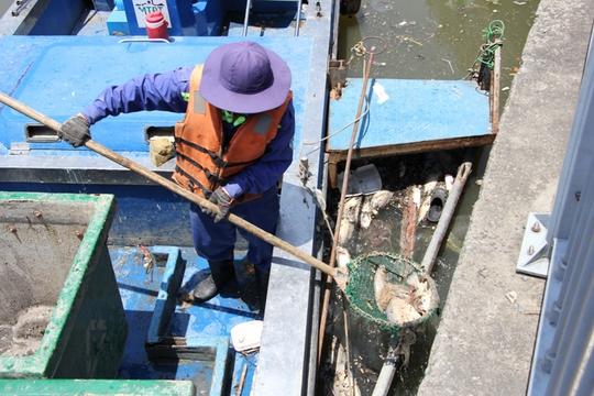 Công nhân Công ty Môi trường đô thị TP vớt xác cá trên kênh trưa 4-4