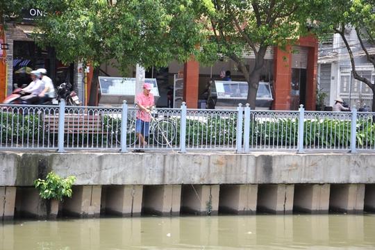 Nhiều cần thủ kiên nhẫn câu cá giữa trưa nắng dù xác cá chết cách đó không xa