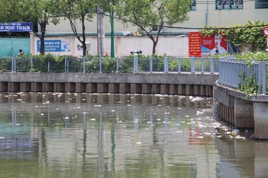Xác cá nổi trên mặt nước xen lẫn với rác, đoạn gần cầu số 5