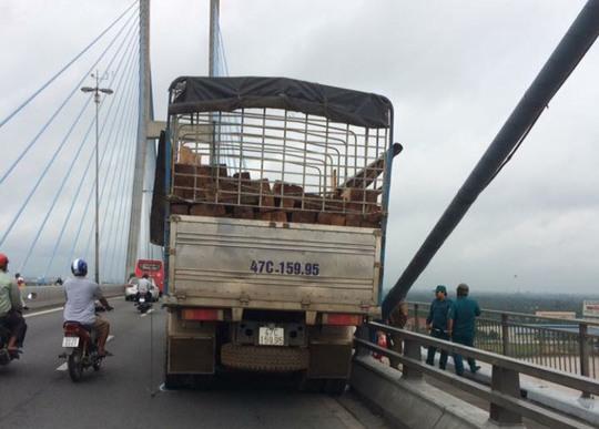 Chạy xe tải lên cầu Mỹ Thuận, tài xế nhảy xuống sông - Ảnh 1.