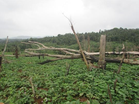 Hàng trăm cán bộ tham gia cấp đất rừng trái quy định - Ảnh 1.