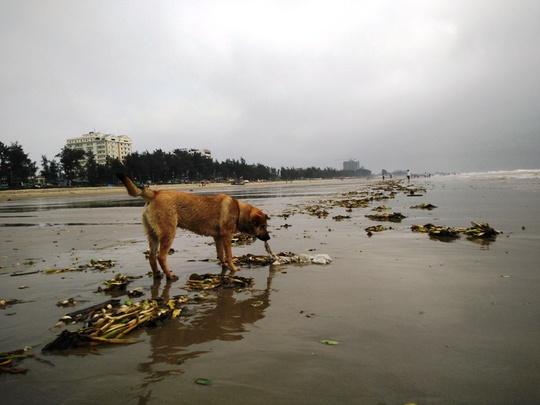 Nội tạng động vật tràn cả vào bờ biển khiến nhiều du khách rùng mình