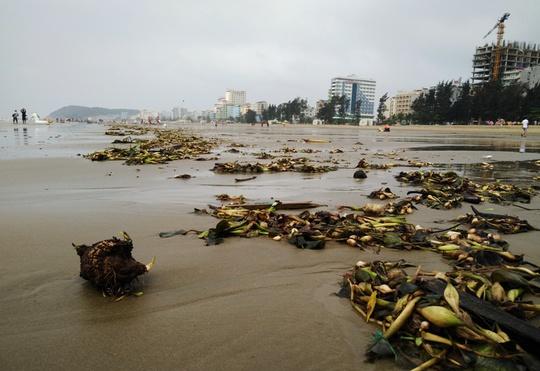 Biển Sầm Sơn ngập rác tại khu vực bãi C