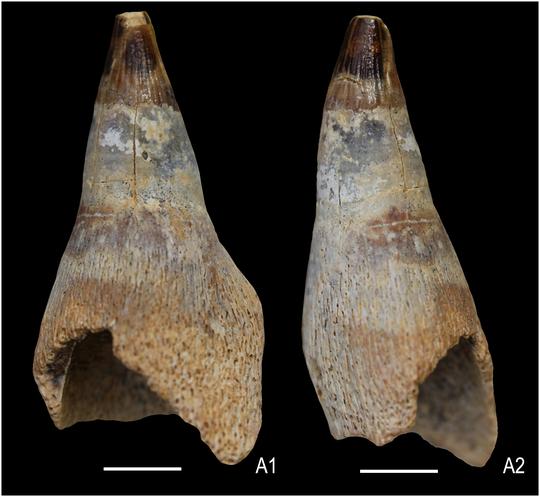 Khai quật quái vật biển đã ngủ yên 150 triệu năm - Ảnh 2.