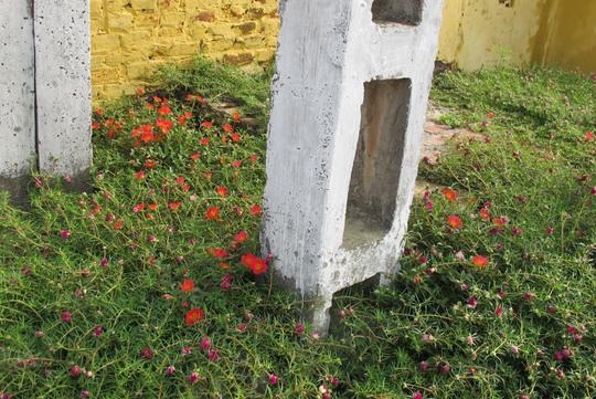 Ngỡ ngàng những con đường hoa rực rỡ làng quê miền Bắc - Ảnh 19.