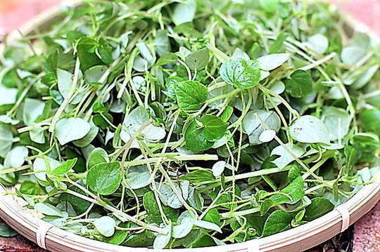 Trổ tài làm gỏi rau càng cua trộn dầu giấm - Ảnh 2.