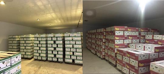 Bầu Đức xuất khẩu hàng ngàn tấn chuối sang Trung Quốc - Ảnh 2.