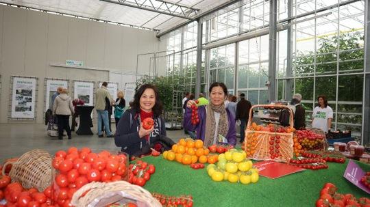 Van de Knnap - khu cà chua