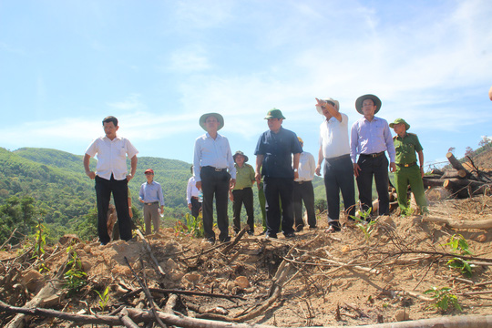 """Thêm 20 ha rừng ở Bình Định bị """"bốc hơi"""" - Ảnh 1."""