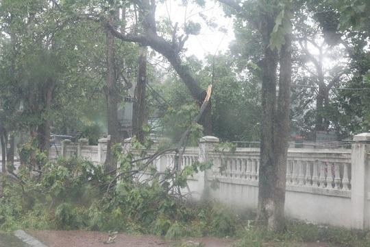Bão số 10: Cuồng phong quét qua, nhà tốc mái, cây đổ la liệt - Ảnh 20.