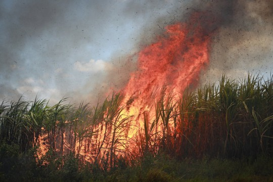 Điều tra vụ thiêu rụi khoảng 100 ha mía sắp thu hoạch - Ảnh 1.