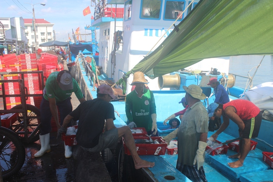 Trúng đậm cá ngừ sọc dưa, ngư dân thu tiền tỉ - Ảnh 3.