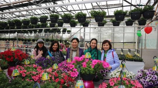 Cán bộ Đại sứ quán Việt Nam tại Hà Lan tham quan khu nhà kính Westland