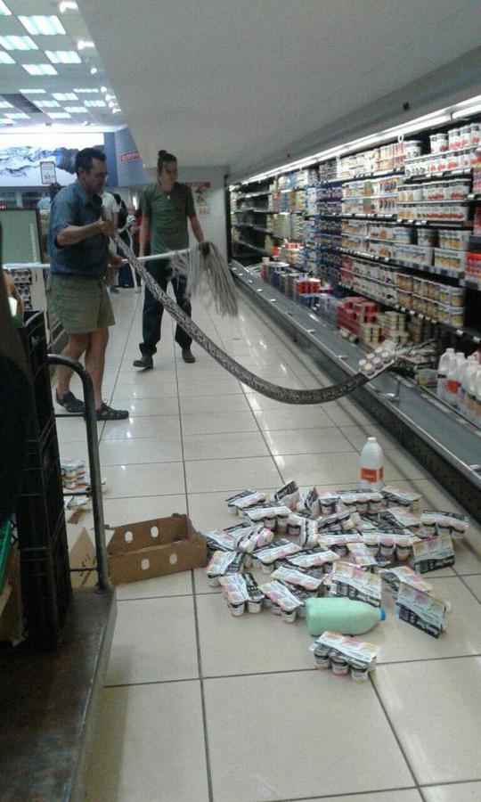 Con trăn được thợ bắt rắn lôi ra khỏi đống sữa chua. Ảnh: Jamie Pyatt News