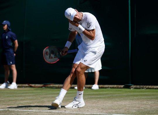 Wimbledon khổ vì kiến cánh - Ảnh 1.