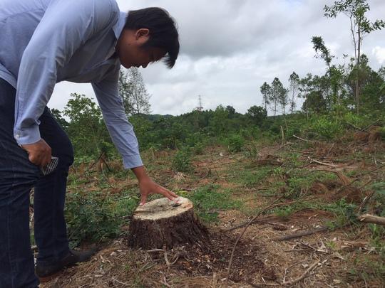 Rừng thông đặc dụng ở thành phố bị biến mất giữa ban ngày - Ảnh 2.