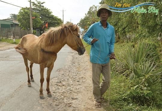Ông Chau Miel xem ngựa là tài sản quý