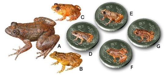 "7 loài ""ếch đêm"" mới được phát hiện: A. Radcliffe, B. Athirappilly, C. Kadalar, D. Sabarimala, E. Vijayan, F. Manalar, G. Robin Moore. Ảnh: CBS News"