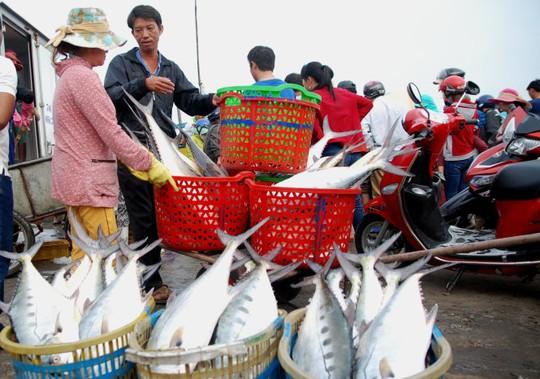 Những con cá bè tươi rói trong mẻ cá 160 tấn ở vùng biển Cồn Cỏ được đưa vào bờ sáng 12-3 - Ảnh: Q.Nam