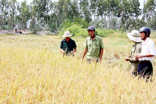 """Một """"cò"""" lúa đang thương lượng giá cả với nông dân"""