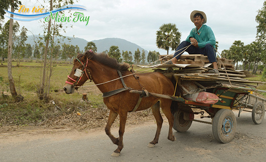 Cuối năm, xe ngựa đắt chuyến hơn