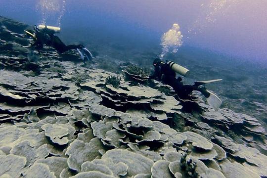 Ủy ban Ranh giới Thềm lục địa Liên Hiệp Quốc (CLCS) tuyên bố Benham Rise là một phần thềm lục địa của Philippines. Ảnh: PHILSTAR
