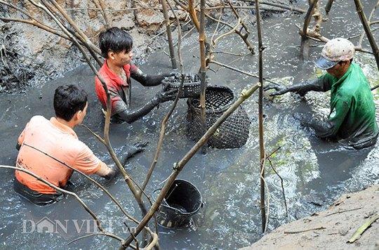 Sau khi bơm cạn nước trong đìa, người dân sẽ dùng tay không bắt cá