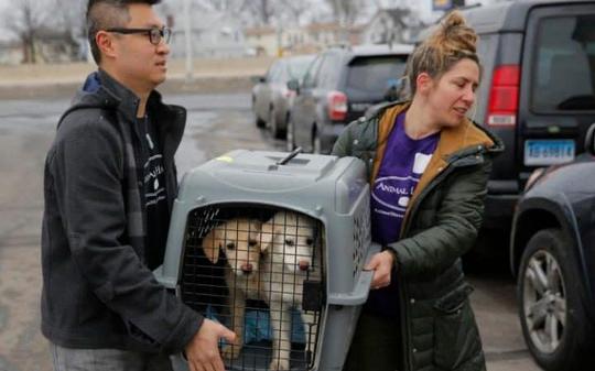 Hai chú chó được cứu khỏi trang trại giết mổ Hàn Quốc được đưa lên một chiếc xe vận chuyển động vật gần Sân bay Kennedy. Ảnh: AP
