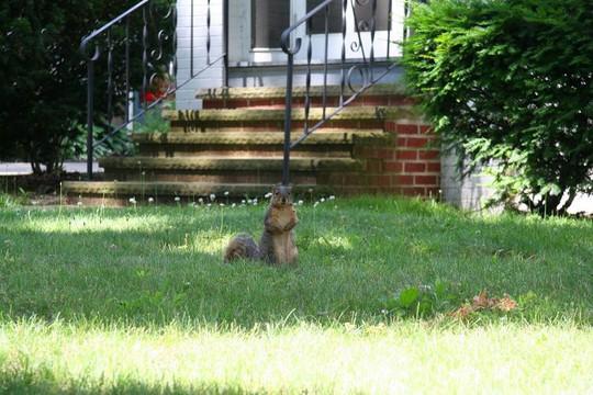 Những con sóc nhỏ kiếm ăn một mình