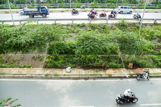 Kiểu trồng rau có 1 không 2 của người Hà Nội - Ảnh 2.