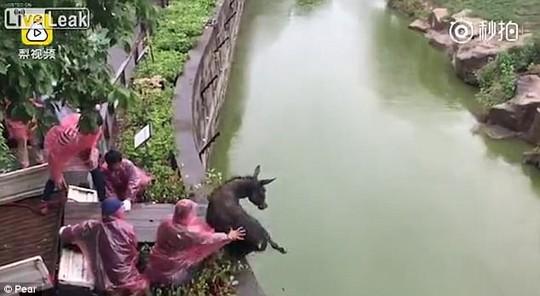 Du khách sốc cảnh cọp xé xác lừa trong sở thú Trung Quốc - Ảnh 1.