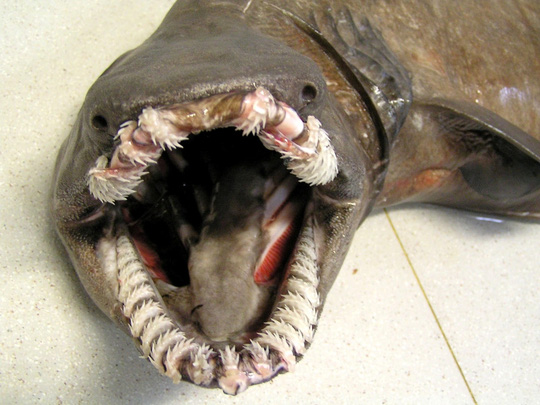 8 sinh vật kỳ dị dưới đáy đại dương - Ảnh 2.