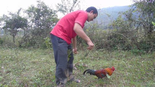 Tận mắt chứng kiến độc chiêu săn gà rừng xứ Nghệ - Ảnh 2.