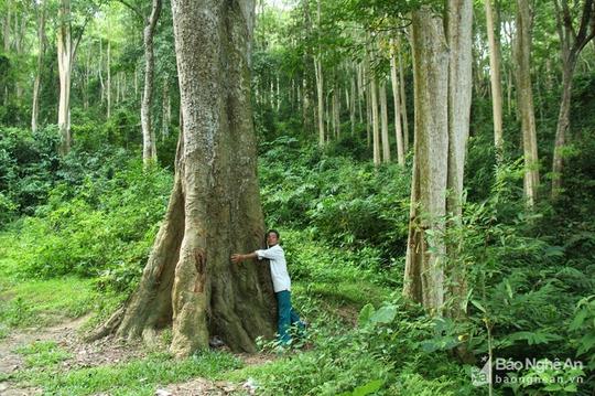 Khu rừng cấm ở Tương Dương - Ảnh 1.