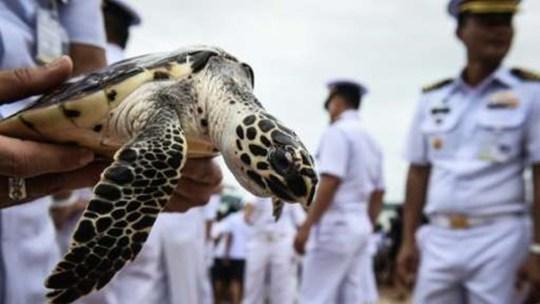 Thả 1.066 con rùa mừng sinh nhật thứ 65 nhà vua Thái Lan - Ảnh 1.