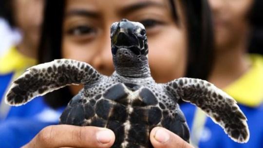 Thả 1.066 con rùa mừng sinh nhật thứ 65 nhà vua Thái Lan - Ảnh 2.