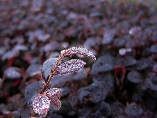 Vẻ đẹp của sương sớm trong nắng ban mai - Ảnh 2.