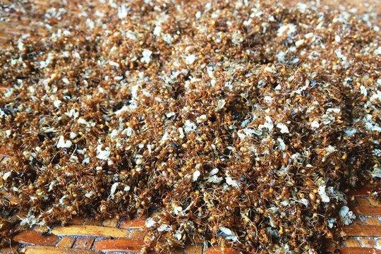 Trứng kiến vàng - món ăn dân dã độc đáo miền núi - Ảnh 1.