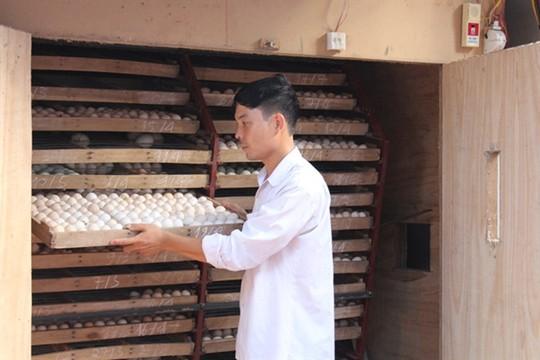 Ấp trứng vịt lộn, một thôn thu gần 200 tỉ đồng mỗi năm - Ảnh 2.