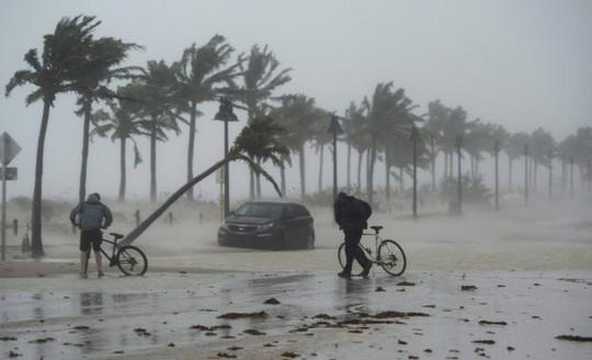 Mất nhà vì bão Irma, cá sấu lang thang ở Florida - Ảnh 2.