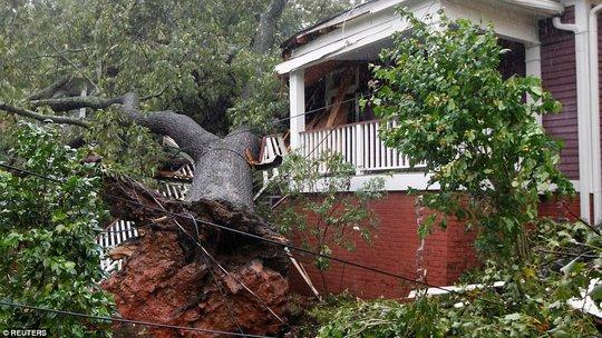 Mất nhà vì bão Irma, cá sấu lang thang ở Florida - Ảnh 5.