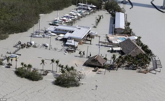Mất nhà vì bão Irma, cá sấu lang thang ở Florida - Ảnh 6.