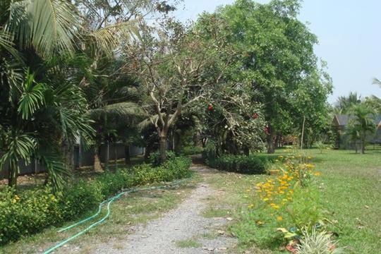 Vườn cây ăn trái 4 tỉ đồng như công viên của bà mẹ 2 con tại TP HCM - Ảnh 2.